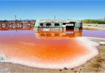 Wastewater bioremediation